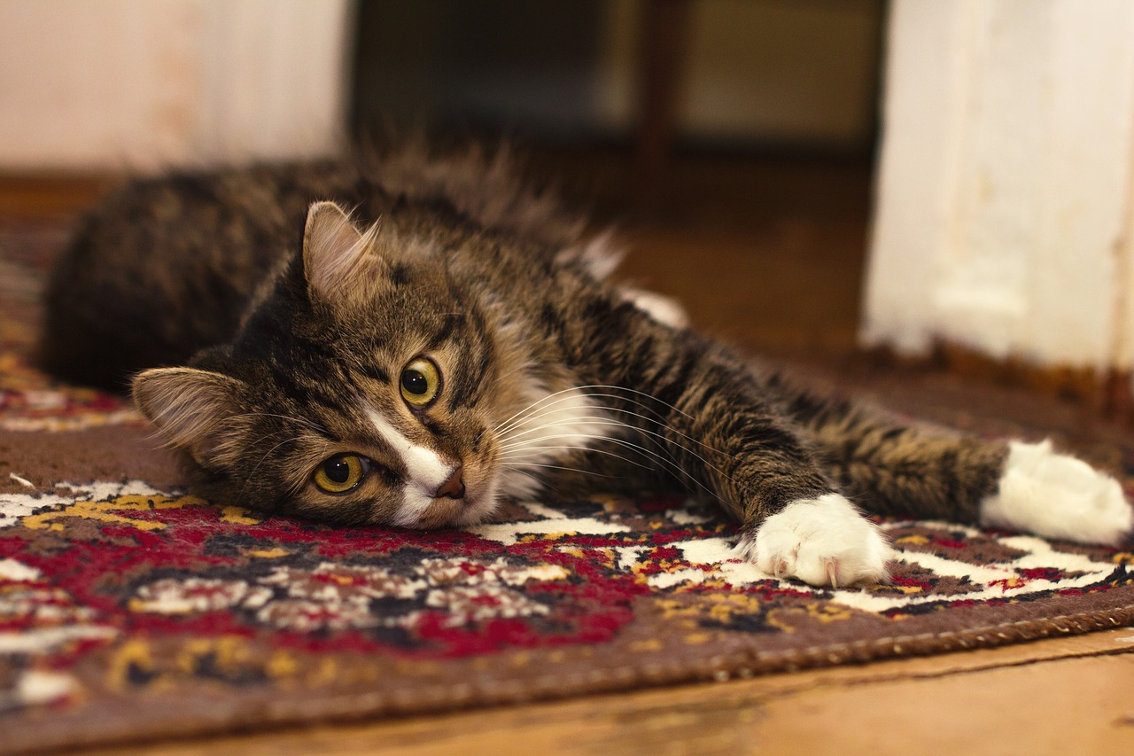Get Cat Smell Out Of Carpet