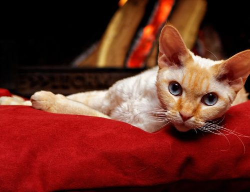 How to Clean Cat Urine Off Couch Cushions